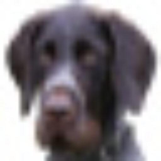 Harte Hunde Neue Folgen 2021